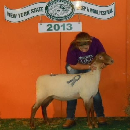 Jewel Tunis - 2019 NY State Sheep and Wool Festival