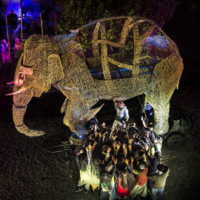 avatar for Elefante Salomão
