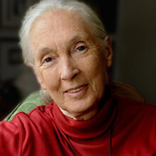avatar for Dr. Jane Goodall