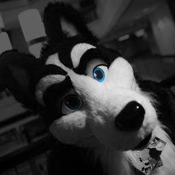 avatar for Kane Husky
