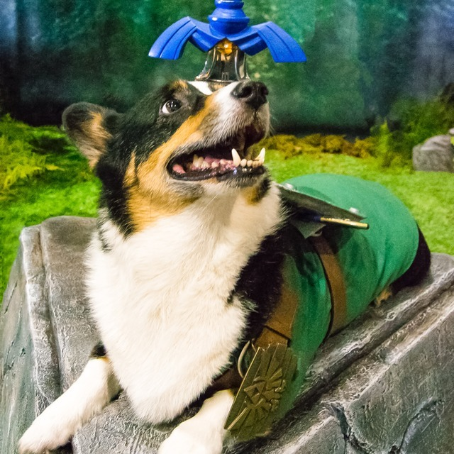avatar for Corgi Cosplay