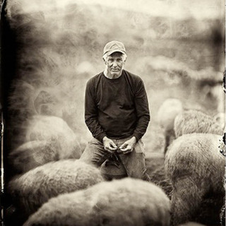 avatar for Catskill Merino Sheep Farm