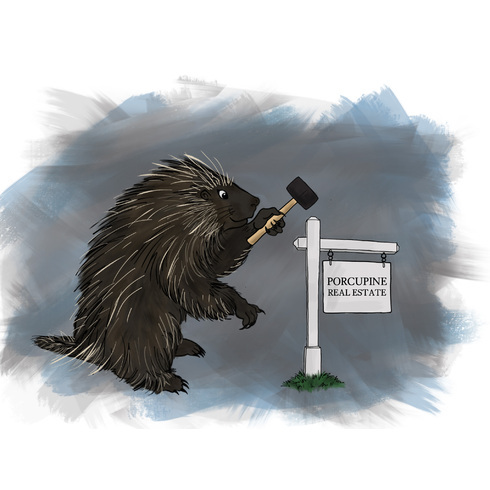 avatar for Porcupine Real Estate