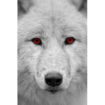 avatar for Tungsten Wolfram