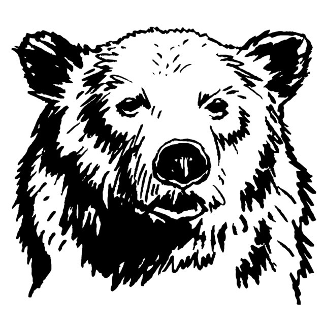 avatar for Bear Ogilvy